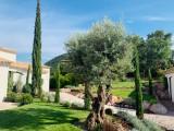 Cannes Luxury Rental Villa Coronille Garden 2