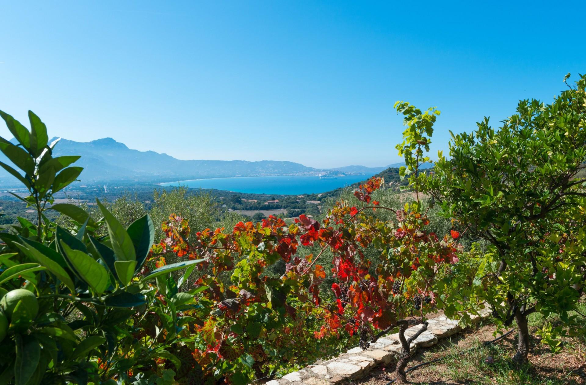 Calvi Location Villa Luxe Diademe Vue